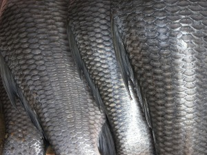 Fish_scales